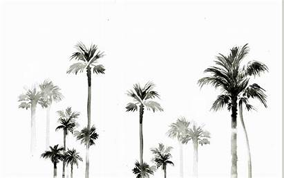 Palm Trees Desktop Summer Tree Wallpapers Background