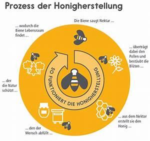 Wie Machen Bienen Honig : ber die honigbiene ~ Whattoseeinmadrid.com Haus und Dekorationen