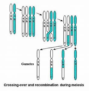 Recombination. Causes, symptoms, treatment Recombination