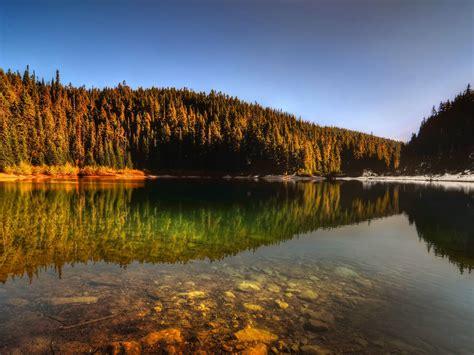 forest lake reflection wallpaper  wallpaperscom