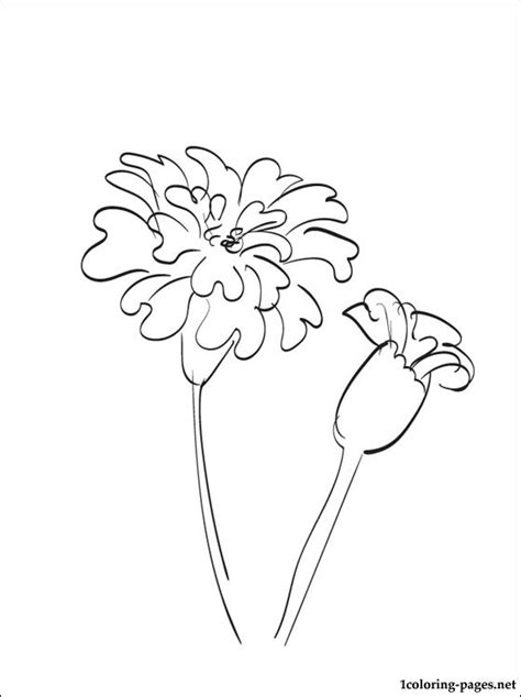 marigold coloring page coloring pages