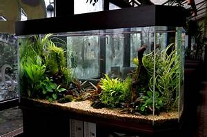 16 fish tank decorations that will inspire you With decorative fish tank ideas things to consider