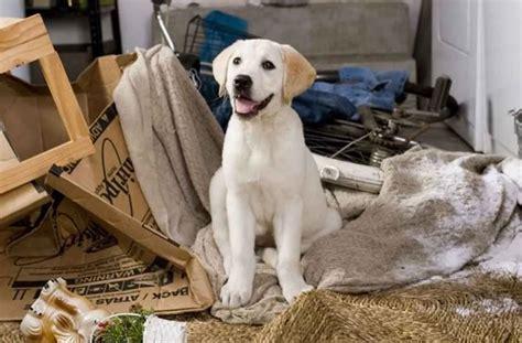cuisine professionnelle occasion adopter un chien l 39 élever correctement et en prendre soin