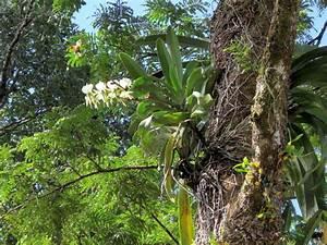 Luftwurzeln Bei Orchideen : hoch in den b umen bl hen sie foto bild pflanzen pilze flechten bl ten ~ Frokenaadalensverden.com Haus und Dekorationen