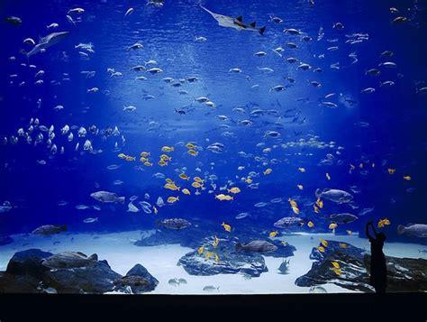 the world s largest aquarium
