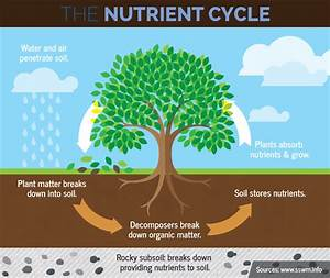 Lesson 10: What's In Soil? with Nutrition - Illinois Farm ...