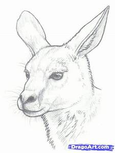 How to Draw Kangaroos, Step by Step, desert animals ...