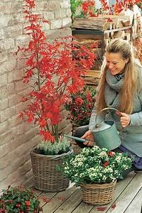 Zählt Terrasse Zur Wohnfläche : terrasse herbstlich dekorieren mein sch ner garten ~ Lizthompson.info Haus und Dekorationen