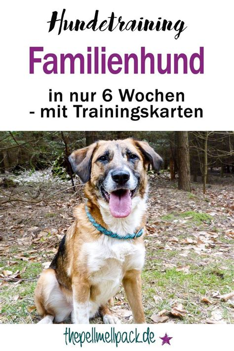Glueckliche Haustiere Sauberkeit Und Erziehung by In 6 Wochen Zum Familienhund Teil 3 Wunderbare Tiere