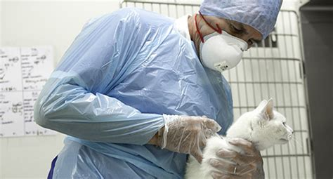 rvc hypophysectomy