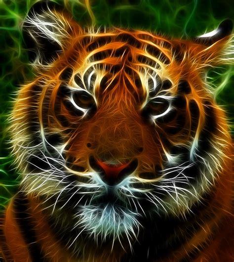 illustration tiger feline cat animals animal