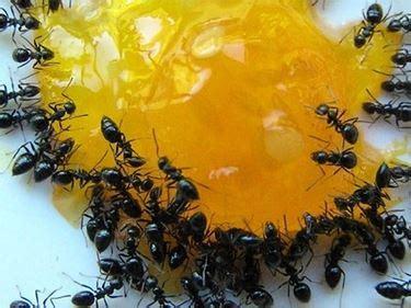 eliminare le formiche dal giardino come eliminare le formiche da orto e giardino coltivare