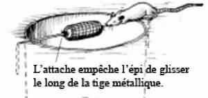 Comment Tuer Un Rat : comment liminer les rats dans un jardin taupier sur la ~ Mglfilm.com Idées de Décoration