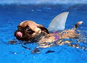 a funny dog swimming - Dump A Day