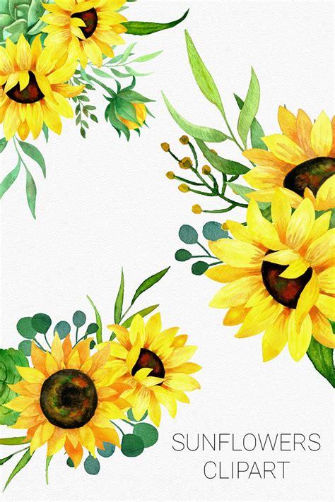 sunflowers watercolor clipart bouquets  frames