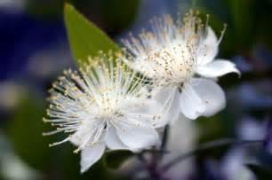 royal blue wedding flower index m z fantastical wedding stylings