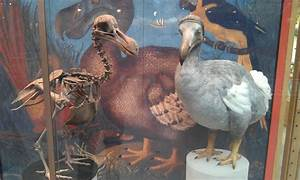 Dinos And Dodos Oxford University Museum Of Natural