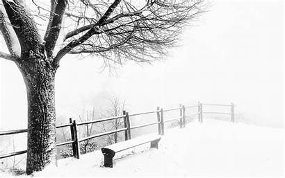 Weather Cold Wallpapers Foggy Winter Tree Bench