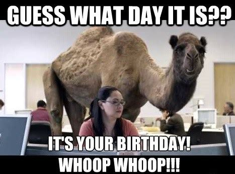Funny Birthday Memes For Her - 20 most hilarious happy birthday memes sayingimages com