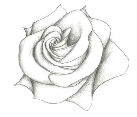 drawing pencil rose drawing flowers   draw  rose