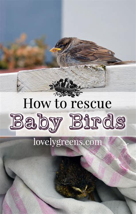 451 best images about birds on pinterest quails