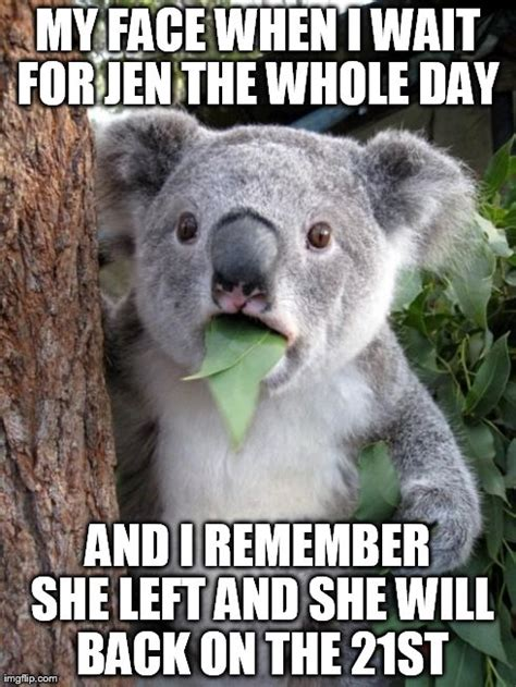 Meme Generator Koala - koala meme generator wolak s koality koala a koality by joshua pin koala meme generator sonal