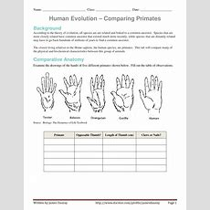 Evolution Of Human Thumb  Evidence Of Human Evolution Worksheet  Comparing Primates By
