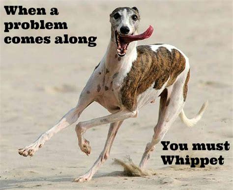 cheesy dog puns  brighten  day