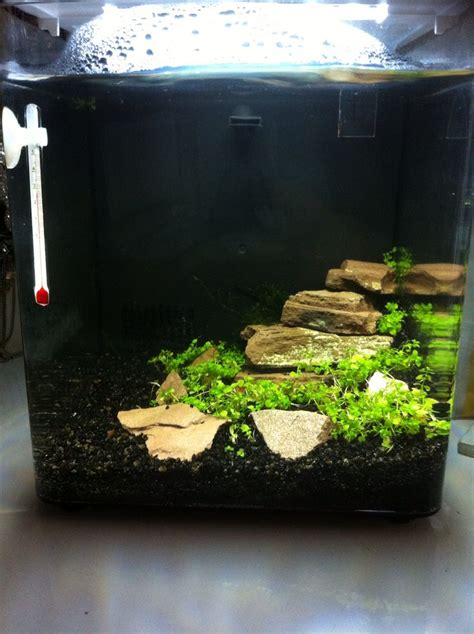 Aquascape Shrimp Tank by Aquascape For The Nano Aquarium With Shrimps Shrimps