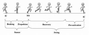 20 The Phases Of The Running Gait Cycle The Phases Have