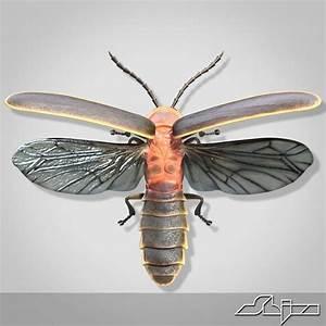 Firefly Anatomy