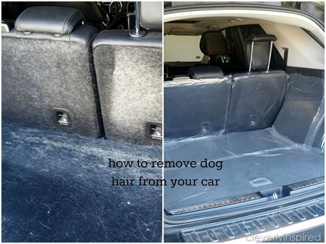 dog hair   vehicle carpet carpet vidalondon