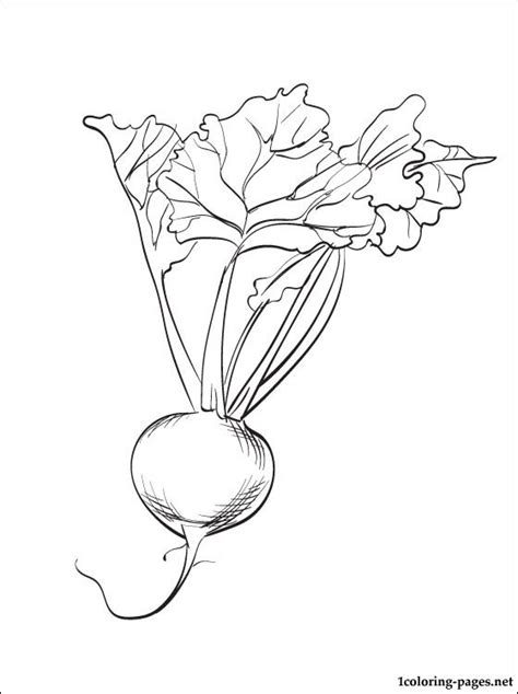 beet coloring page  print  coloring pages