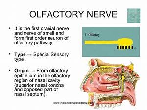 Cranial Nerves   Certified Fixed Orthodontic Courses By