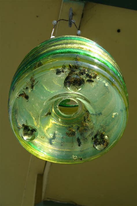 Wasp Trap Pics - Monarch Butterfly New Zealand Trust