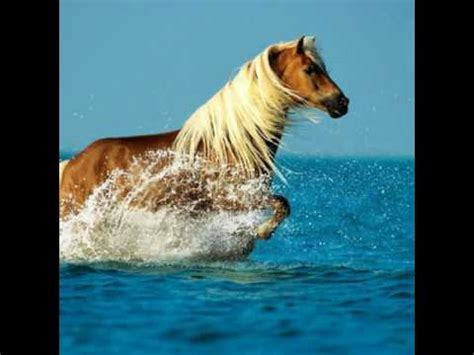 Die Schönste Farbe Der Welt by Die Sch 246 Nsten Pferde Bilder