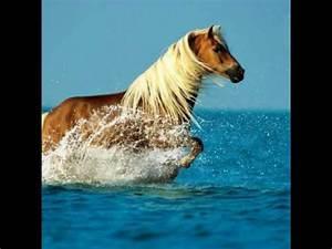Bilder Von Pferden : die sch nsten pferde bilder youtube ~ Frokenaadalensverden.com Haus und Dekorationen