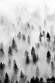 Amazing Black and White Photography Fog