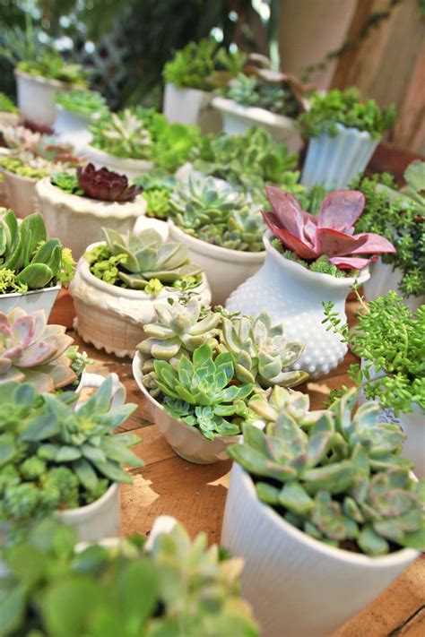 Wedding Succulent Centerpieces Diy
