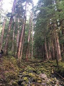 create a phone list sol duc falls nature trail washington alltrails