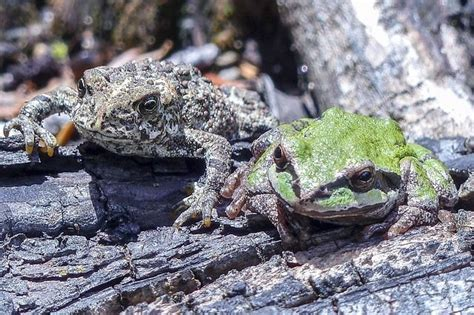 What do Toads Eat in the Garden?   GardensAll   Toad ...