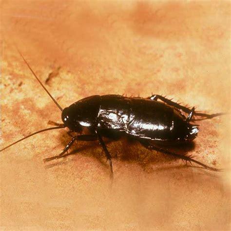 cockroach exterminators control removal portland wa