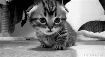 Cats Mean Kitten Nasty Hungry Trying Hard