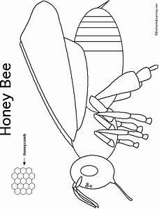 Honey Bee Printout  Simple