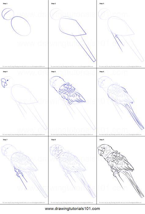 draw  military macaw printable step  step