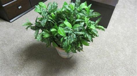silk plant small wceramic arizona style vase home decor