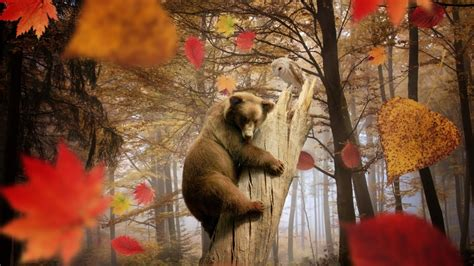 Fall Wallpaper With Animals - nature landscape trees leaves fall animals bears