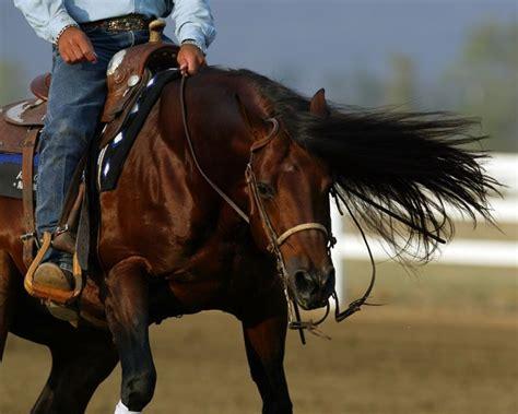 reining horse horses montana nic western spin stallions schmersal mister cowgirls pretty cowboy