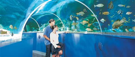 aquarium supplies san jose bangkok aquarium pet supply their great fish set up san jose ca