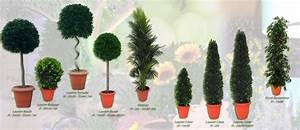 Arbustes Décoratifs à Fleurs : location de plantes et d 39 arbustes d coratifs paris val ~ Premium-room.com Idées de Décoration